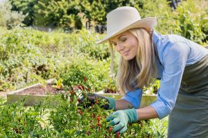 pruning helps your garden be more fruitful
