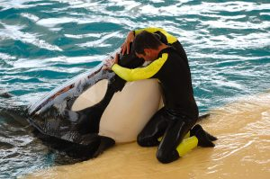 trainer and killer whale. the relationship is similar to how we can be nurturing employees